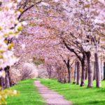 二十四節気の意味と閏月の決め方について